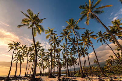 Hawaii Towering Palms Art Print by Mike Reid
