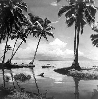 Palm Tree Photograph - Hawaii Tropical Scene by Underwood Archives
