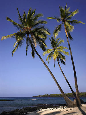 Photograph - Hawaiian Beach by Inge Riis McDonald