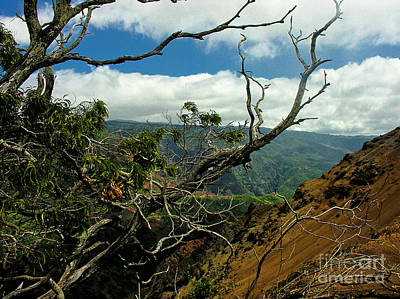 Photograph - Hawaiian Canyon by Tom Griffithe