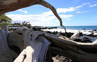 Photograph - Hawaiian Driftwood by Mary Haber