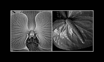 Photograph - Hawaiian Floral Diptych 2 by Patricia Strand