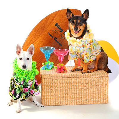Martini Photos - Hawaiian Party Surf Dogs by Rebecca Brittain