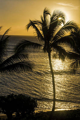 Photograph - Hawaiian Silhouette by Colleen Coccia