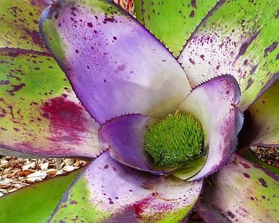 Photograph - Hawaiian Succulent by Patricia Strand