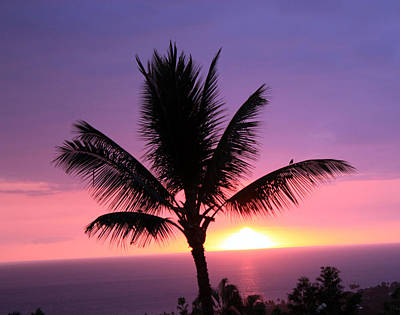 Art Print featuring the photograph Hawaiian Sunset And Palm by Karen Nicholson