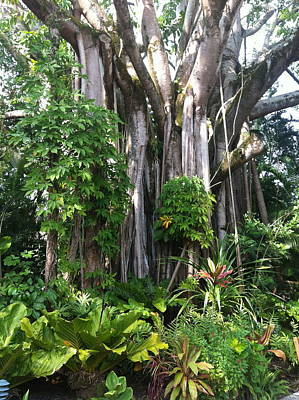 Hawaiian Tropical Forest Art Print