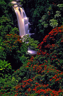 Hawaiian Waterfall With Tulip Trees Art Print by Marie Hicks