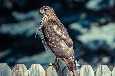 Mixed Media - Hawk 4 by Connie Dye