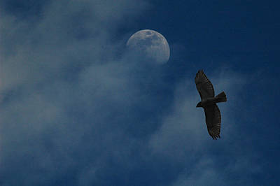 Hawk And Moon Coming Out Of The Mist Art Print by Raymond Salani III