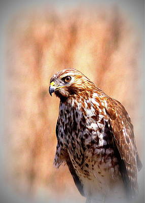 Impressionist Landscapes - Hawk by the Lake by Travis Truelove