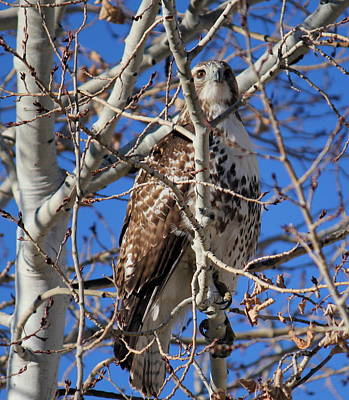 Photograph - Hawk Camo by Trent Mallett