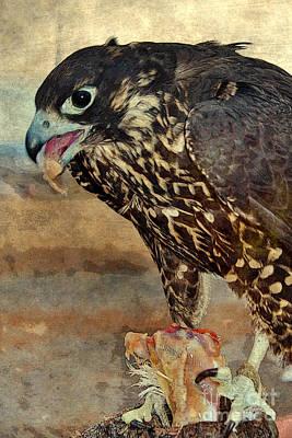 Hawk Dining On Chicken Art Print by Janice Rae Pariza