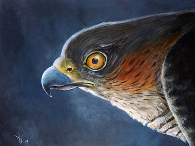 Sparrowhawk Painting - Hawk-eye by Arie Van der Wijst