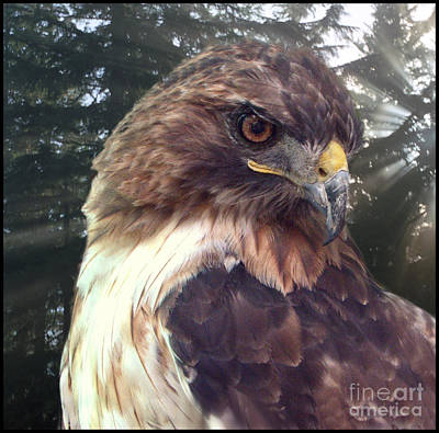 Hawk Eye - Wildlife Art Photography Art Print by Ella Kaye Dickey