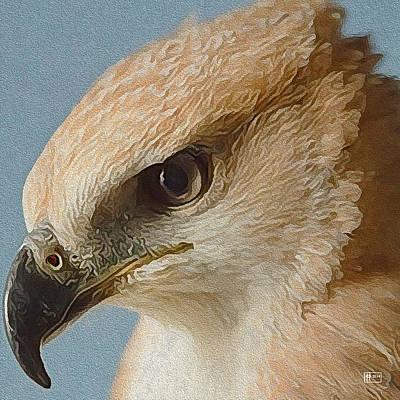 Digital Art - Hawk-eyed by Jim Pavelle