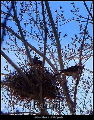 Photograph - Hawk Family Nesting by Bobbee Rickard