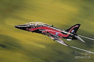 Moody Painting - Hawk by Greg Bajor