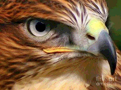 Digital Art - Hawk by Herb Paynter