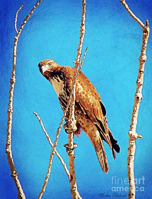 Photograph - Hawk In A Glow by Bobbee Rickard