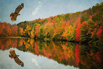 Photograph - Hawk In Reflection by Emily Stauring