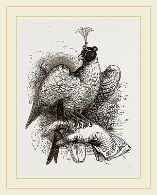 Fists Drawing - Hawk On Fist by Litz Collection