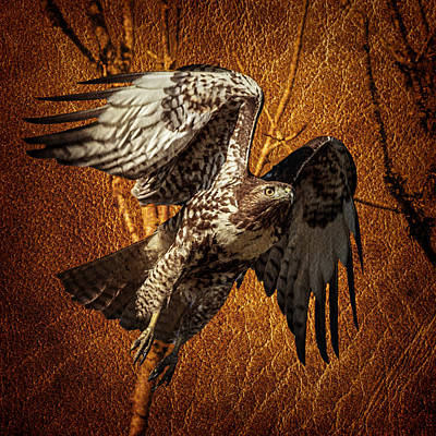 Bif Photograph - Hawk On Leather by Wes and Dotty Weber