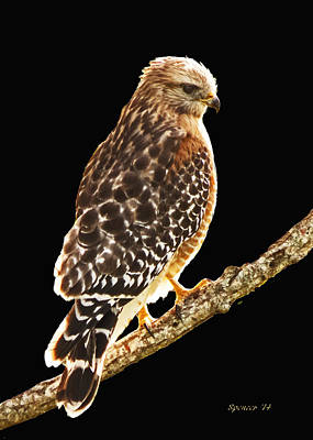 Photograph - Hawk On Perch by T Guy Spencer