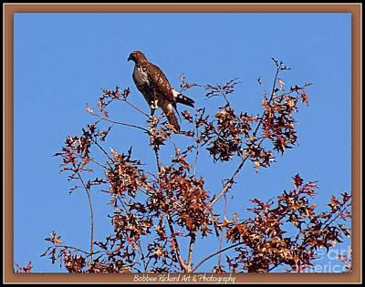 Photograph - Hawk On Watch 2 by Bobbee Rickard