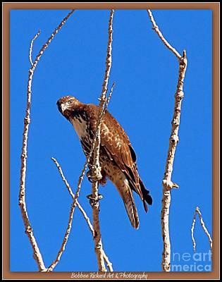 Photograph - Hawk On Watch by Bobbee Rickard