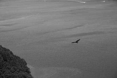 Photograph - Hawk Over Hudson by Robin Mahboeb