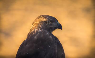 Hawk Profile Art Print by Marc Crumpler