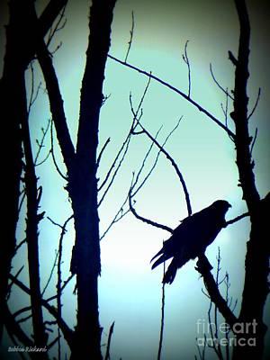 Photograph - Hawk Silhouette II by Bobbee Rickard