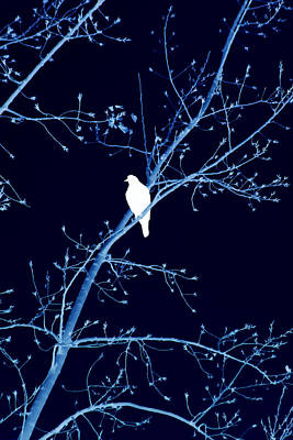 Photograph - Hawk Silhouette On Blue by Lesa Fine