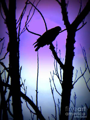 Photograph - Hawk Silouette  by Bobbee Rickard