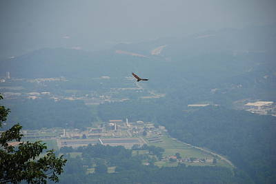 Photograph - Hawk Soars Above Chattanooga Valley by Kenny Glover