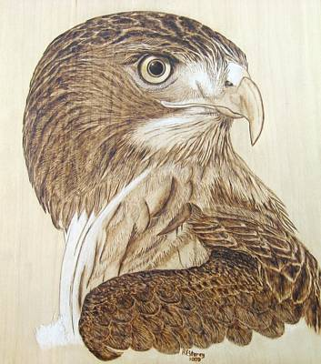 Pyrography On Wood Pyrography - Hawk Watch by Roger Storey