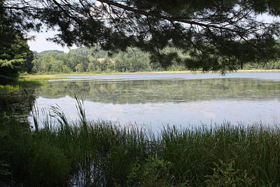 Photograph - Hawkins Pond Ny by Lucinda VanVleck