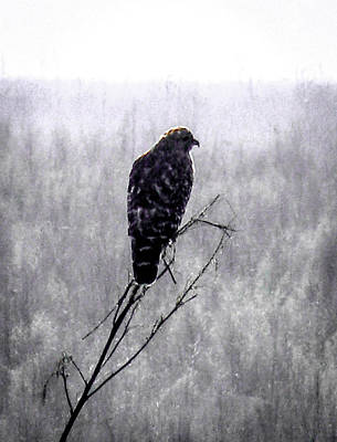 Photograph - Hawks Foggy Morning by Christy Usilton