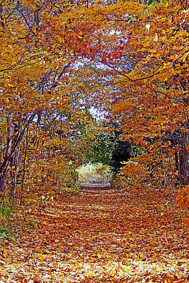 Photograph - Hawthorn Hollow by Kay Novy