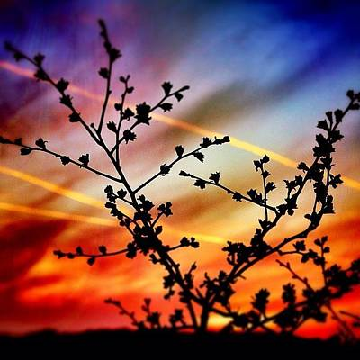 Trail Photograph - Hawthorn Sunset by Phil Tomlinson