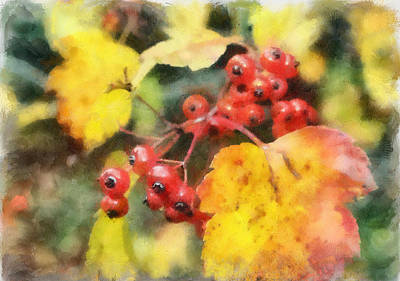 Digitalized Photograph - Hawthorne Berries by Gerry Bates