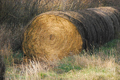 Photograph - Hay Bale by Mary Carol Story