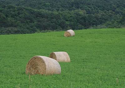 Photograph - Hay Bales On  Emerald Green  by Phoenix De Vries