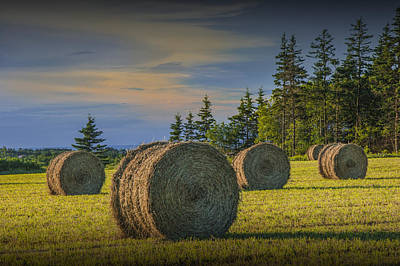 Animal Portraits - Hay Bales on Prince Edward Island by Randall Nyhof
