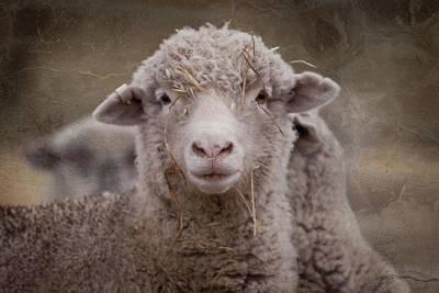 Photograph - Hay Ewe by Michelle Wrighton