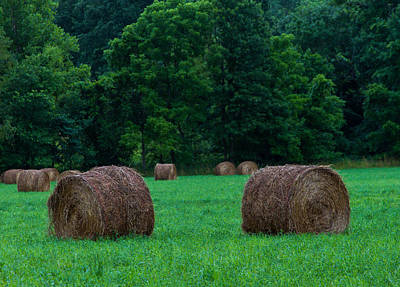 Photograph - Hay Field Sentries by Haren Images- Kriss Haren