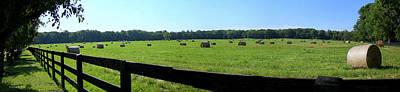 Photograph - Hay Hay by Andrea Platt
