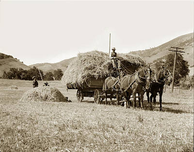 Photograph - Horse-drawn Hay Wagon Carmel Valley California Circa 1905 by California Views Mr Pat Hathaway Archives