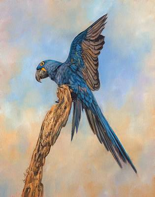 Macaw Art Painting - Hayacinth Macaw by David Stribbling